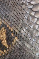 Женская сумка тоут из кожи Питона Python Exclusive_2